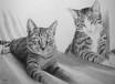 Murmeli & Wieseli - Katzenportrait