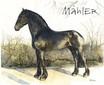 Portrait Pferd Friesenhengst Lammert