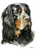 Hundeportrait Gordon Setter
