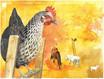 Tierportrait Hühnerüberblick