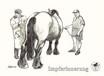 Kaltblutpferd und Tierarzt