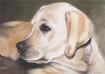 Tierportrait  Tier portrait - Labrador Hell