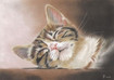 Tierportrait  Tier portrait - Kätzchen  Kitten