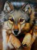 junger Wolf in einem Tiergarten im Taunus