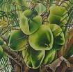 Brazilian Coconuts 3